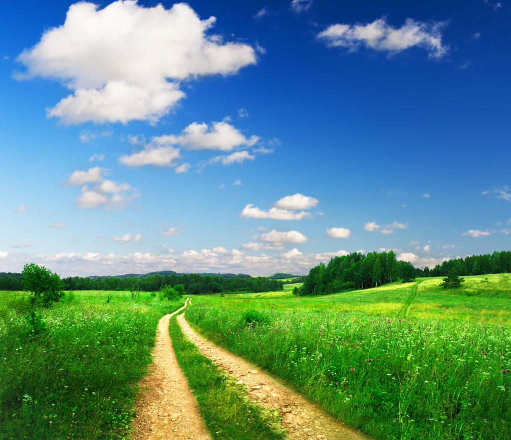 Beautiful summer landscape - grassy field with dirt road going through it